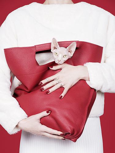 photo détail corps beauté joaillerie bijoux chat