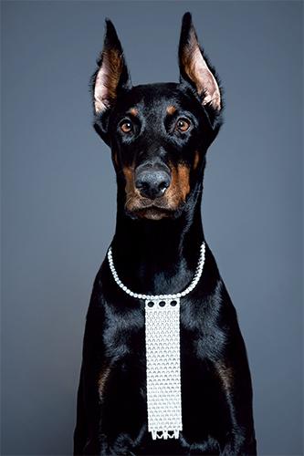édito beauté bijoux haute joaillerie chien maquillage lèvres